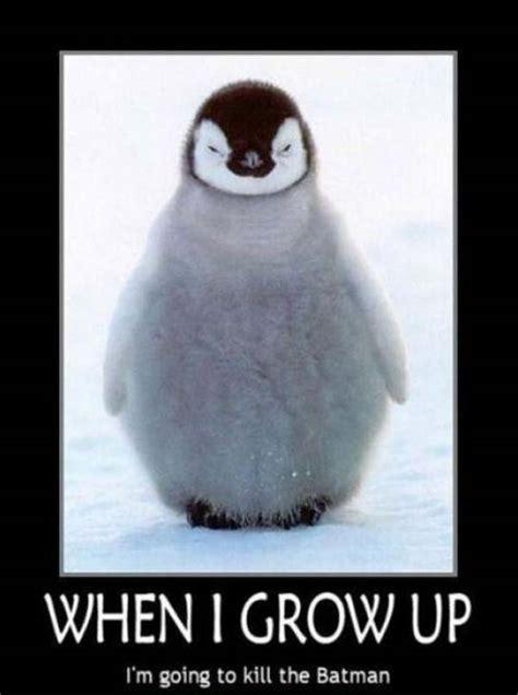 Cute Penguin Meme - kill batman funny penguin memes pics bajiroo com