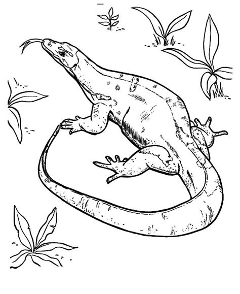 draco lizard coloring pages free coloring pages of flying lizard