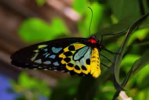 colorful butterfly imperfect spirituality beautiful colorful butterfly