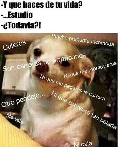Memes De Chihuahua - las 25 mejores ideas sobre chihuahua meme en pinterest