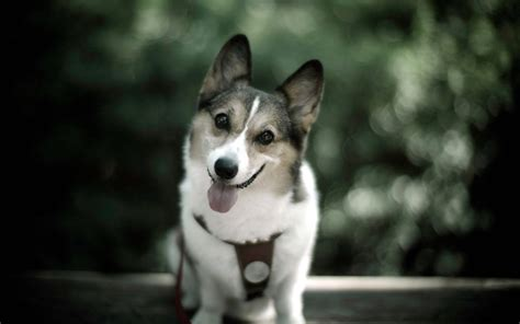 adorable dogs dogs picture