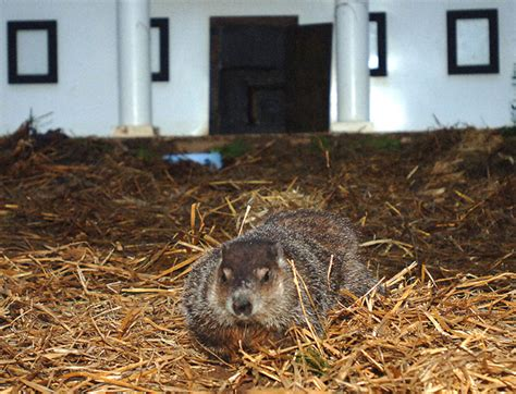 groundhog day yellow river ranch groundhog made correct prediction has not been