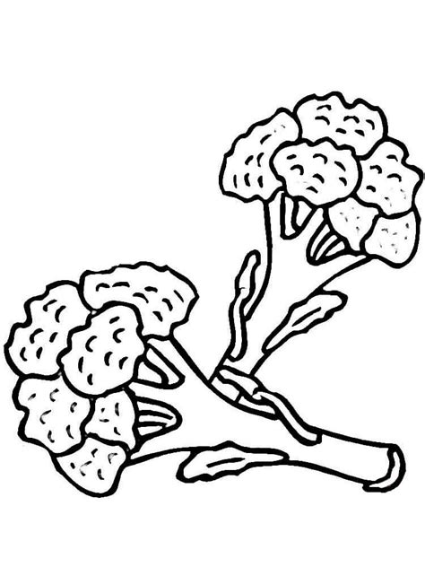 94 vegetables picture 94 vegetables coloring pages 6 carrot 9 coloring