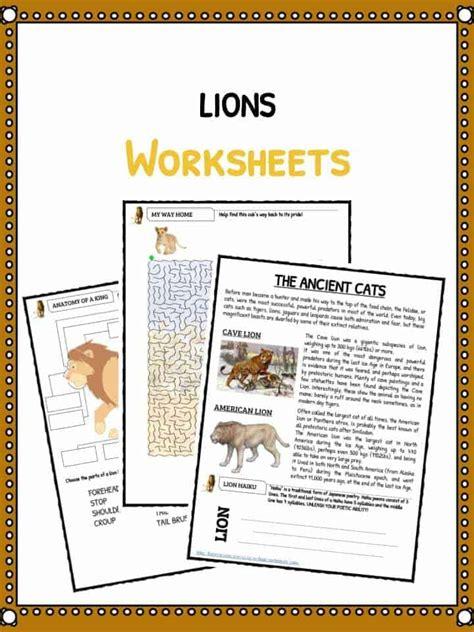 lion facts worksheets information  kids