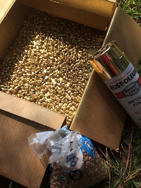 Spray pinto beans with gold spray paint. Cheap vase filler