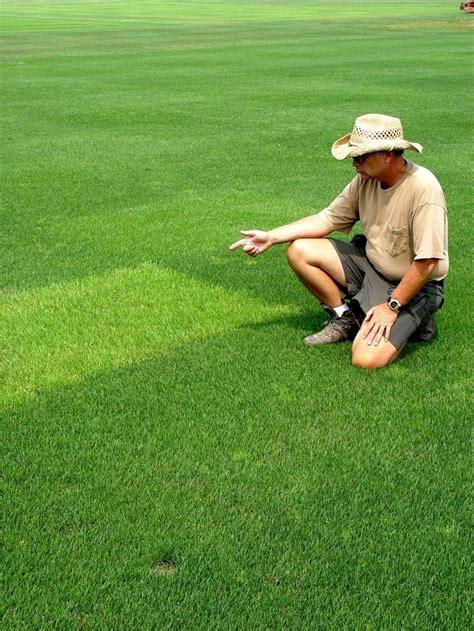 17 best ideas about best grass seed on pinterest planting grass seed grass seed and growing