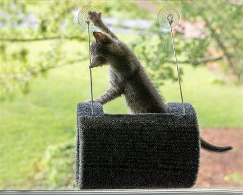 window perch 3 simple ways to keep pets of furniture hgtv