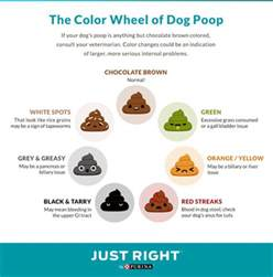 what does the color of your stool nestl 233 purina news center news releases