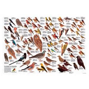 poster 171 oiseaux des jardins 187 ligue royale belge pour