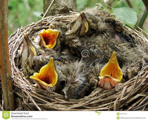 nestling stock images image 4171714