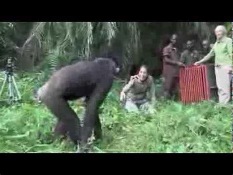 das musst du gesehen haben bilder has with a gorilla for 5 minutes videolike