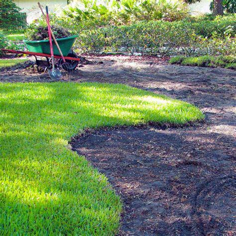gulf coast gardening lawn alternatives for the gulf coast