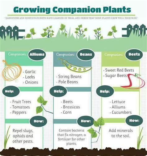 Companion Plants Vegetable Garden Growing Companion Plants Health