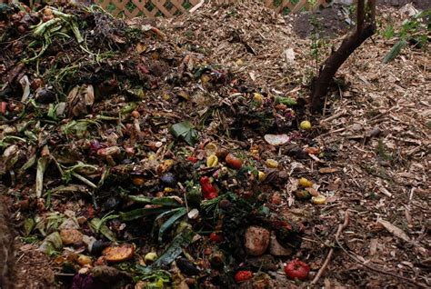 10 items you should never add to your compost pile greener ideal