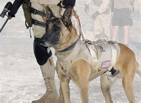navy seal dogs navy seal team 6 breeds picture