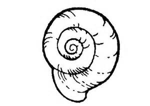 snail coloring page snail coloring pages animal pictures for
