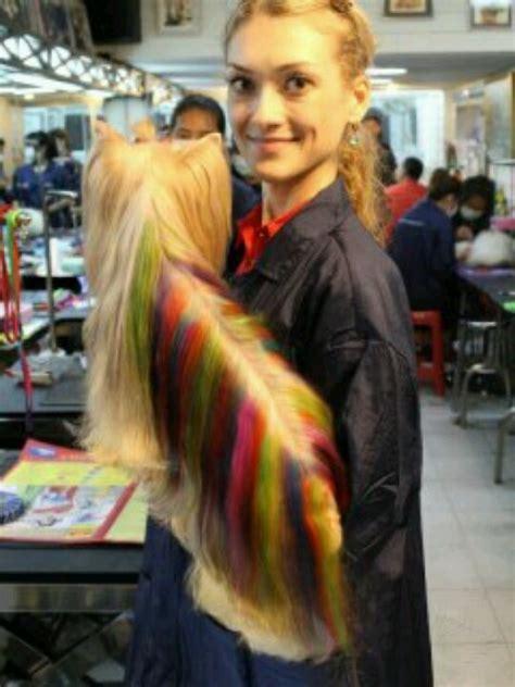 yorkie hair dye best 25 hair dye ideas on kool aid hair kool aid dye and safe hair color