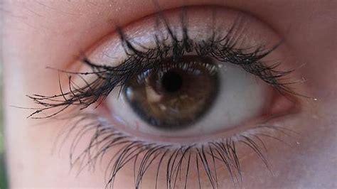imagenes ojos pardos el color de los ojos humanos mediavida