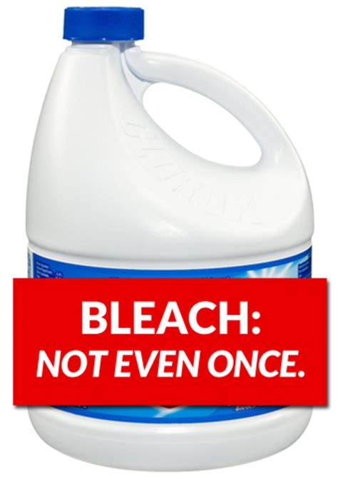 does bleach kill bed bugs bleach and bed bugs 28 images will bleach kill bed