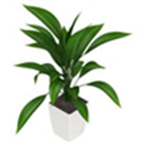 plants that do not need sunlight desk plants that don t need sunlight indoor plant care