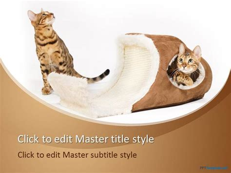 Free Cat Bed Ppt Template Cat Powerpoint Template