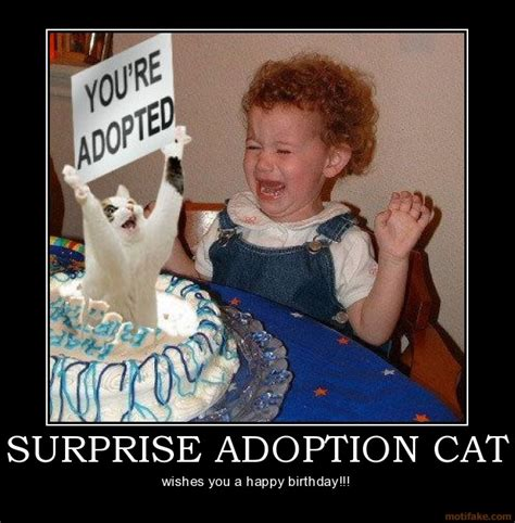 Adoption Meme - funny picture clip best funny cat posters