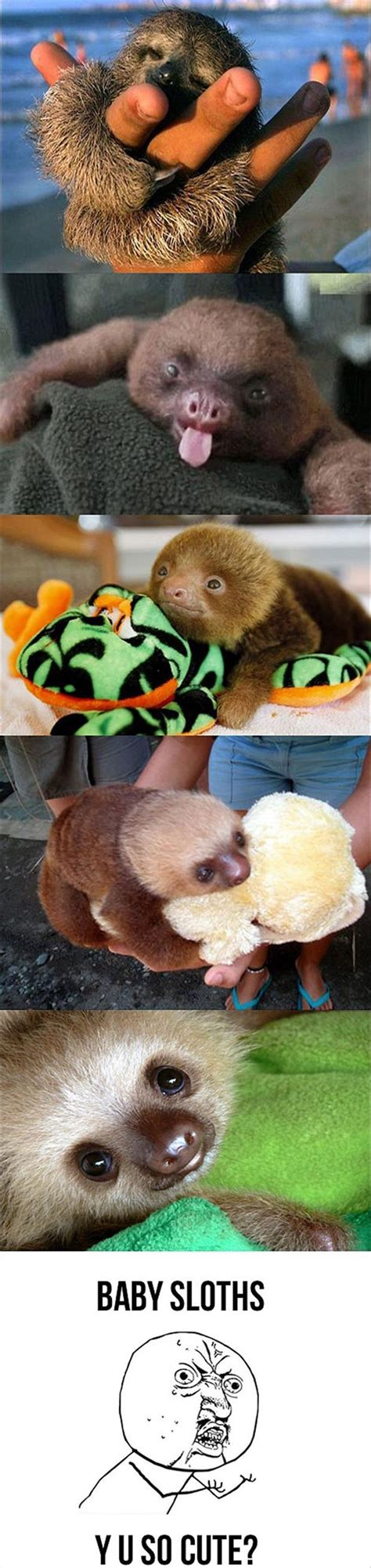 Baby Sloth Meme - funny baby sloth bing images
