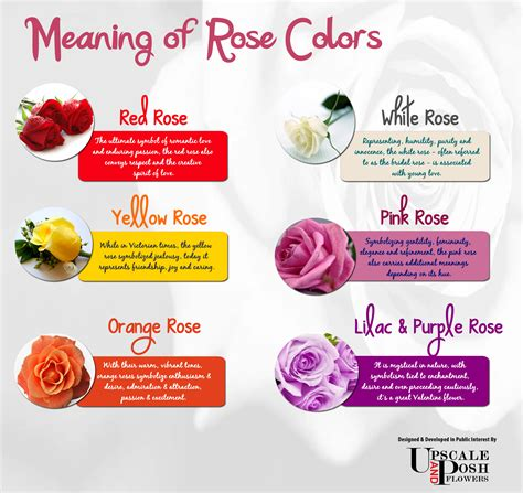 meaning of different color roses different color roses and their meaning www imgkid