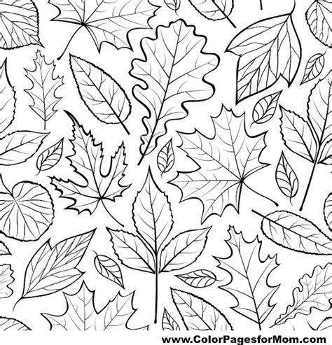 leaves coloring pages for adults advanced leaves coloring page 41