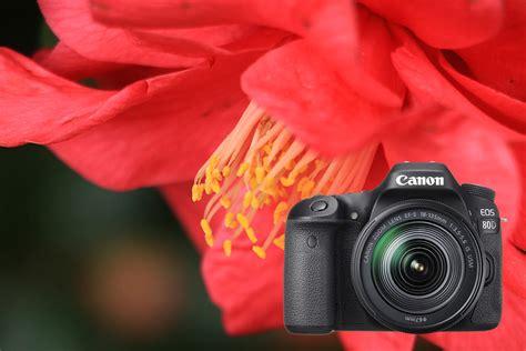 Kamera Canon Untuk Fotografi Ulasan Eos 80d Fotografi Alam