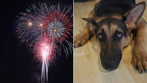 how to calm a during fireworks how to keep pets calm during fireworks displays chicago tonight wttw