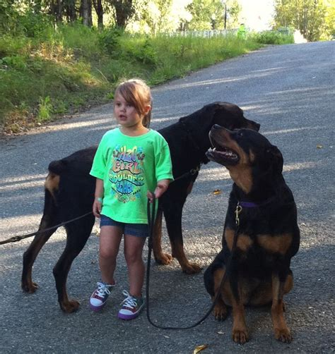 rottweilers and children 1000 images about rottweiler dogs on best