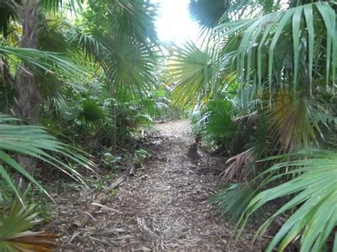 Key West Tropical Forest And Botanical Garden Kw Botanical Garden Foto Di Key West Tropical Forest And Botanical Garden Key West Tripadvisor