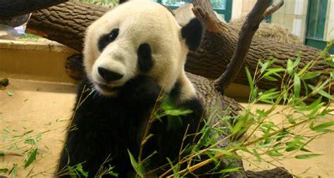 giardino zoologico vienna cosa vedere a vienna con bambini weekend in austria