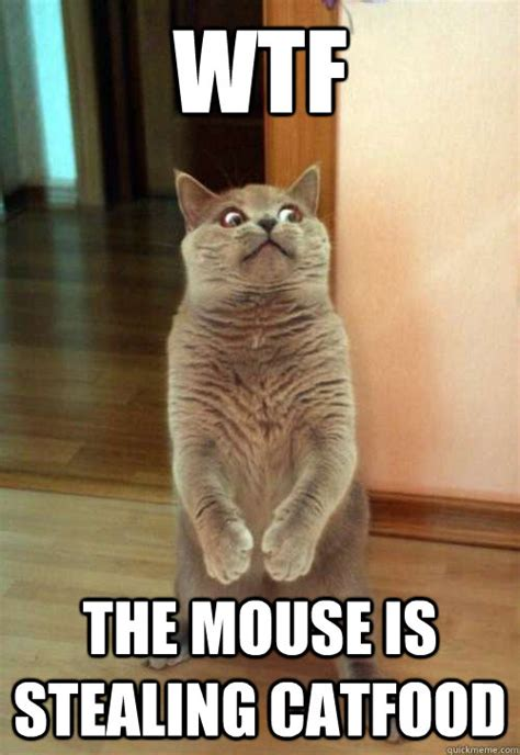 Mouse Memes - wtf the mouse cat meme cat planet cat planet