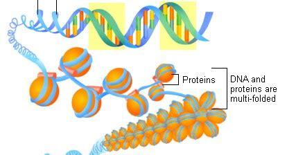Genetika Tumbuhan L V Crowder kromosom substansi genetika de biology