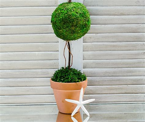 how to make topiaries how to make a topiary it all started with paint