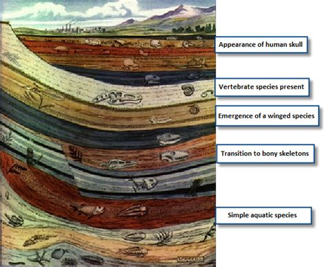 section 17 1 the fossil record answers rock layers fossil record pictures to pin on pinterest