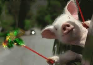 Weeeeeeeeeee by Baby Pigs Wearing People Clothes