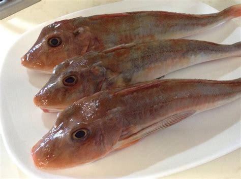 come cucinare il coccio pesce il pesce coccio o gallinella di mare di