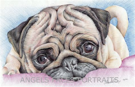 pugs colours pug drawing in colour biro by angelfaces1986 on deviantart