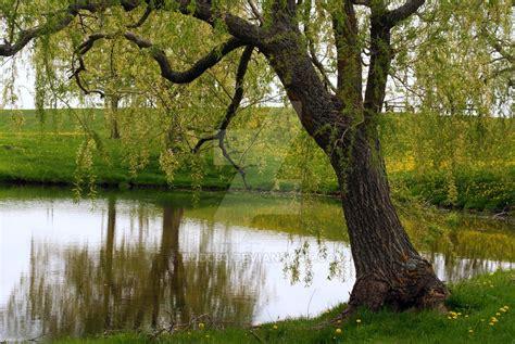 serene comfort serene comfort by audj33 on deviantart
