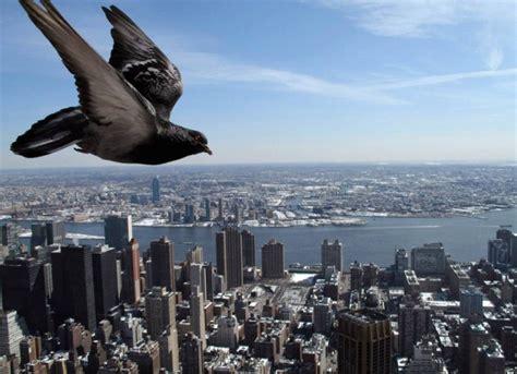 bird closeup amazing photos 171 interesting things in the world