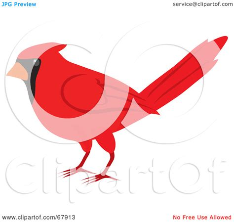 cardinal clip cardinal clipart cardinal pencil and in color