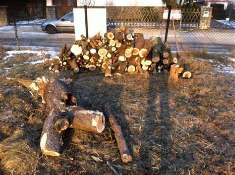 Was Kostet Ein Baum 4662 by Preis Baum F 228 Llen Hochbeet Ideale Gro E Interessante