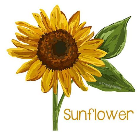 printable sunflower images free sunflower clipart pictures clipartix