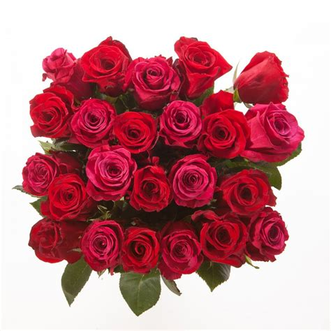 pink and red roses photo red and pink roses bouquet rose bouquets gifts