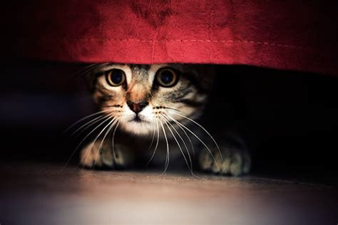 Cat Hiding Bed by Photography Images Photography
