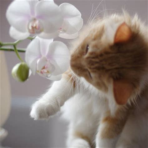 Home Decor Flowers adorable kitten my honeys place