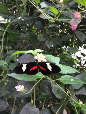 casa delle farfalle marittima casa delle farfalle marittima italien omd 246